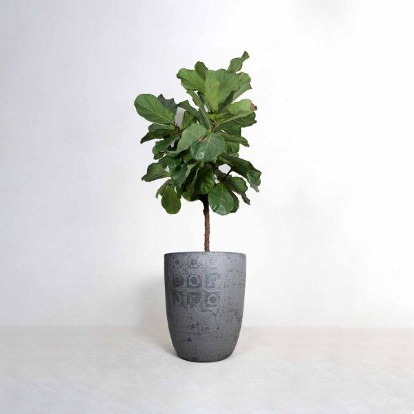Topf 1 Mit Pflanze